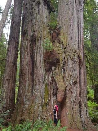 That's a bloody big tree. Picture: Adriana Andrews