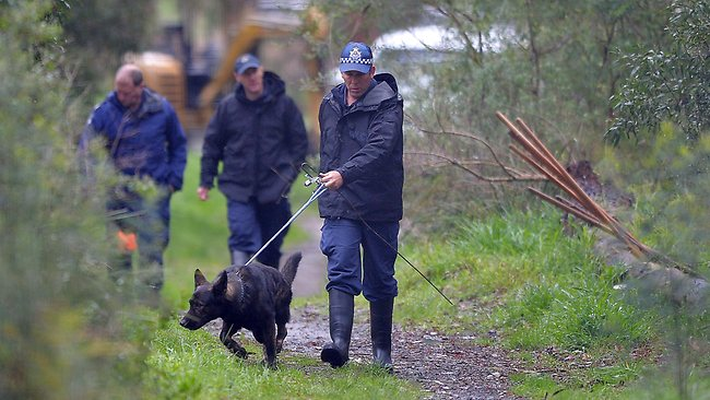 A police dog at the scene of the extensive search of Old Joe's Creek by police for clues in the Siriyakorn 'Bung' Siriboon case. Picture: Nicole Garmston