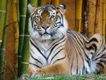 The tiger enclosure at Australia Zoo the day after handler Dave Styles was attacked. Pic: Liam Kidston
