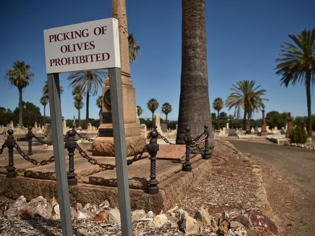 Picking of olives by the public is prohibited at Adelaide's West Terrace Cemetery — but people can buy the olive oil. Picture: AFP/Peter Parks