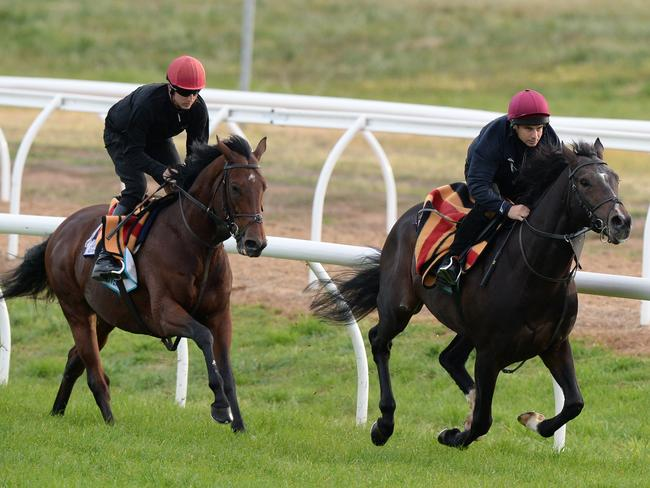 Johannes Vermeer (left) and Taj Mahal (right) stretch out on the Werribee track. Picture: AAP