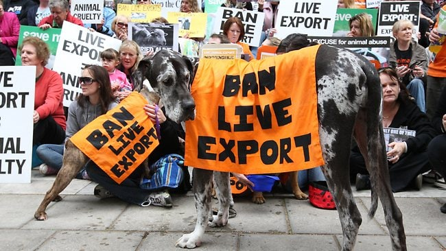 The Ban Live Export rally at South Australia's Parliament House. Picture: Jo-anna Robinson