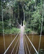 <strong>SARAWAK, BORNEO</strong>  <p>A very narrow suspension bridge crossed during an 8km hike from Kuala Litut to Mulu, Sarawak, Borneo, Indonesia</p>  <p>Picture: AAP</p>