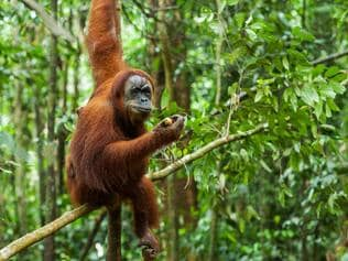 Supplied Travel OCTOBER 9 2016 DEALS Get up close to the wildlife in Sumatra with a package deal from TripADeal
