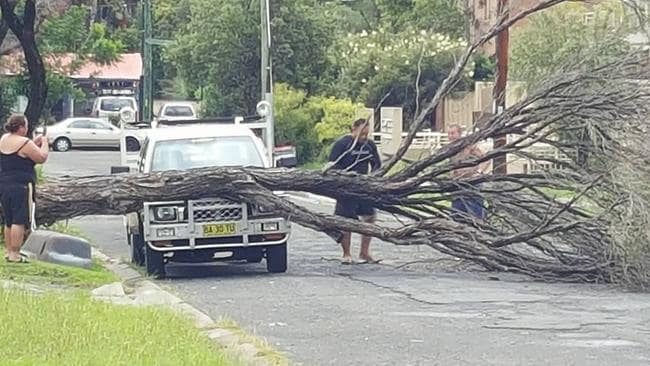 Savage storms saw trees felled across the city's west including in Warwick Farm. Picture by Lynne Cole