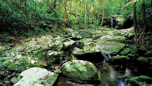 Daintree National Park in North Queensland. Picture Tourism Queensland