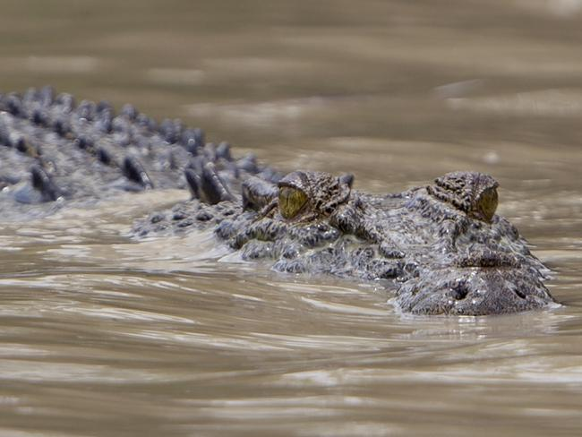 Bizarre croc behaviour 'never seen before'