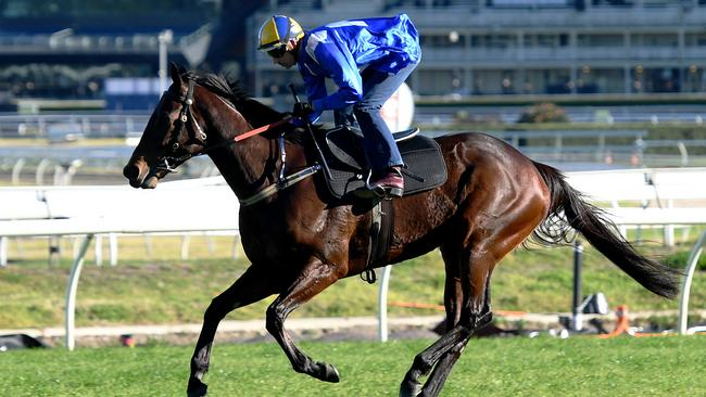 Winx will be shooting for her 18th straight win at Royal Randwick on Saturday.