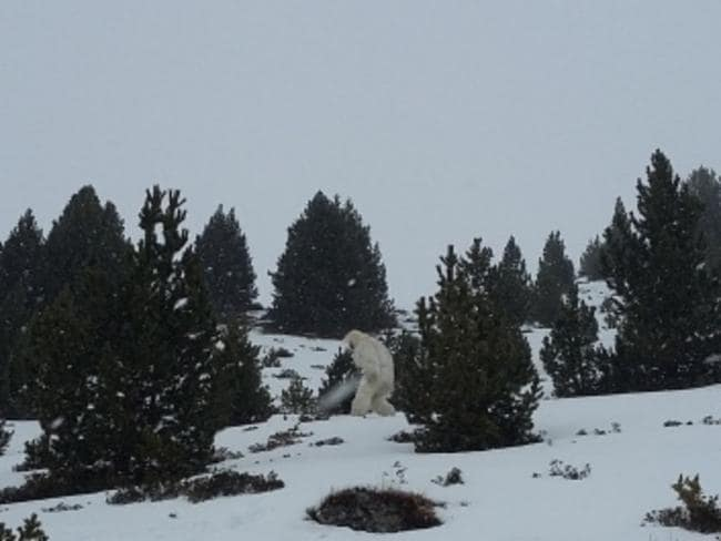 "Unidentified ... The skier who posted this photo asked, ""Is it a bear or a bloody yeti?"" Picture: @forocoches"