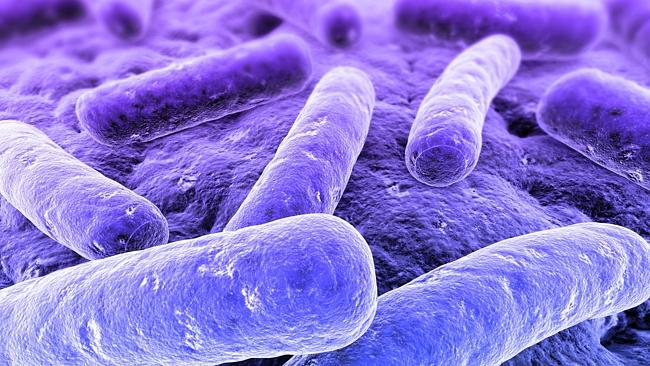 Bacteriophages can attack bacterial rods such as these. (Pic: Sebastian Kaulitzki)