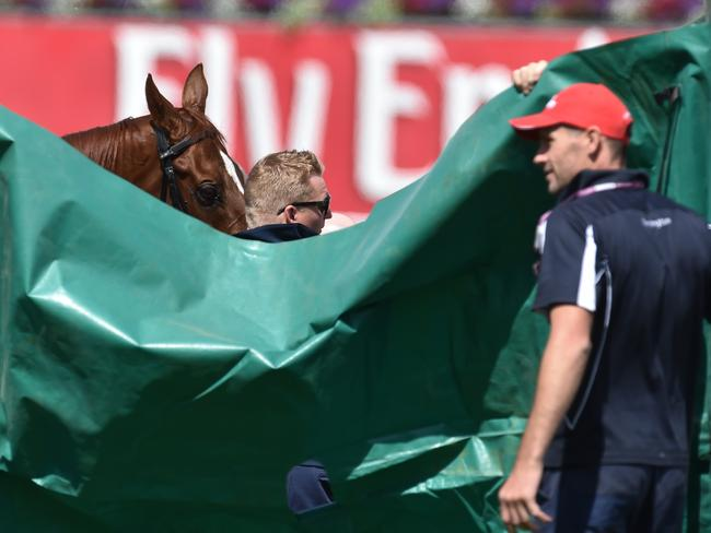 Officials shield Red Cadeaux from the view of racegoers.