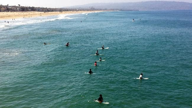 Surfers and swimmers return ... to the ocean one day after a swimmer was bitten by a great white shark off Manhattan Beach. Picture: John Antczak