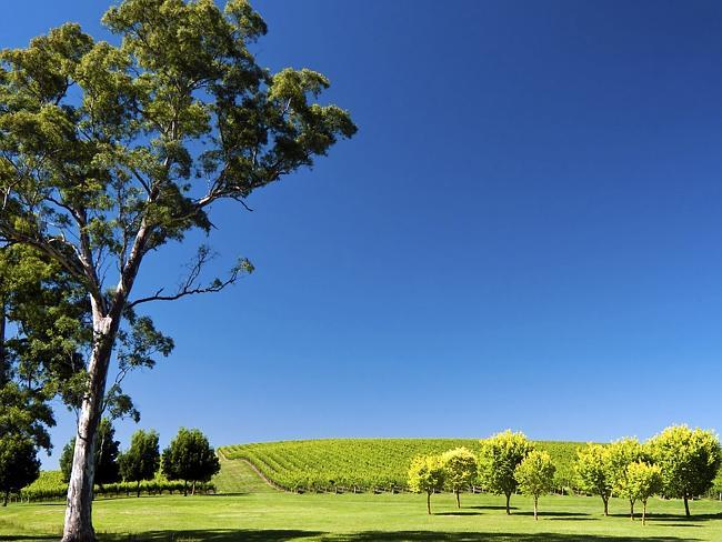Adelaide Hills. Picture: JuanAlbertoGarciaRivera