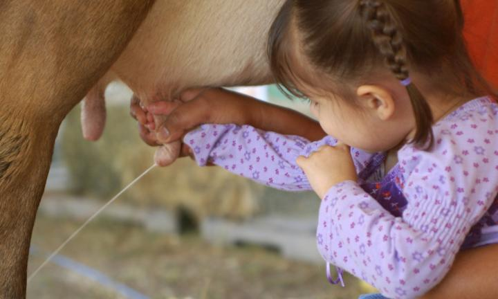 Choose a new Aussie milk for your toddler