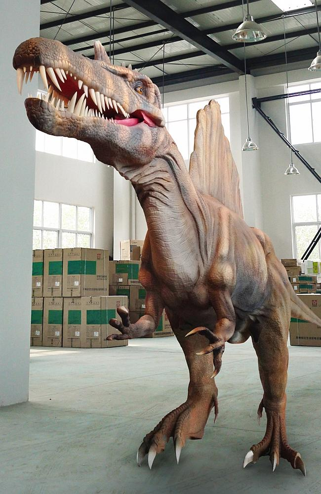 Spinosaurus, one of the star attractions on show at 'Dinosaur Discovery - Lost Creatures of the Cretaceous', on display at The Western Australian Museum from April 11.