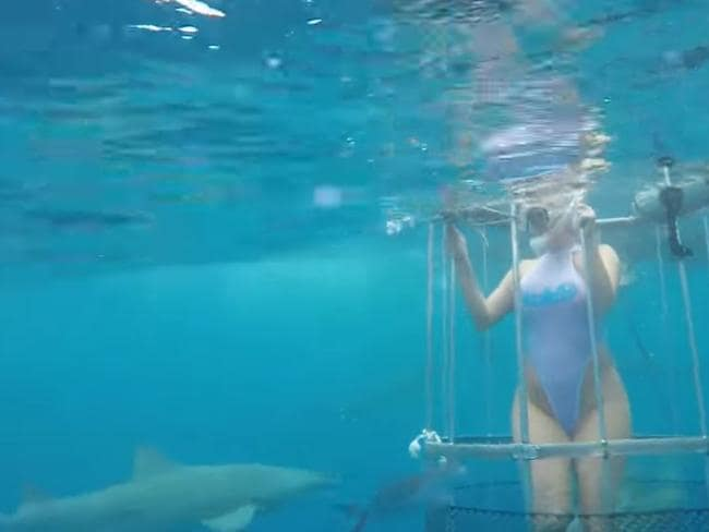The video showed lemon sharks circling Molly Cavalli as she stood in the cage. Picture: CamSoda