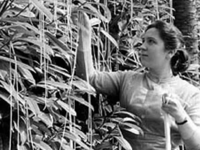 Picking spaghetti during the harvest ... The BBC's classic April Fool's Day joke in 1957.