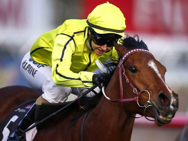 One of Darren Weir's charges Platelet wins the Gilgai Stakes.at Flemington last October.