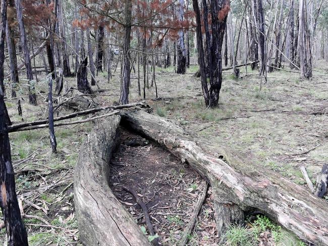 The shallow grave where Karen Ristevski's body was found wedged between two fallen trees at Mount Macedon on February 20. Picture: Nicole Garmston