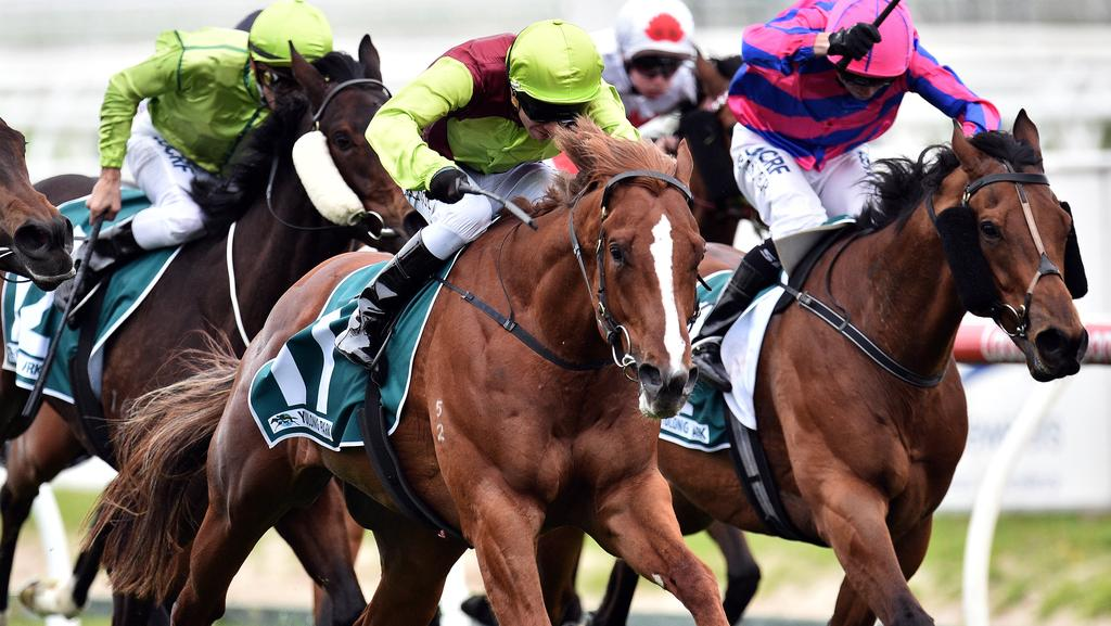 Bon Aurum has been well backed to win the Toorak Handicap.