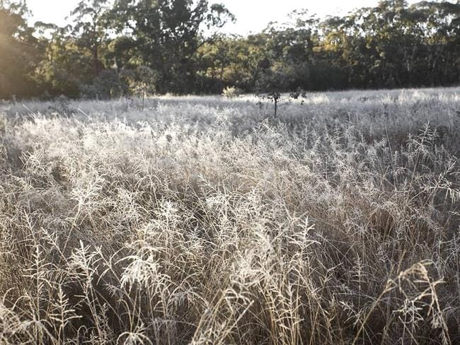 Frost at Stanthorpe on the Granite Belt. Pic: Kaz Mclean