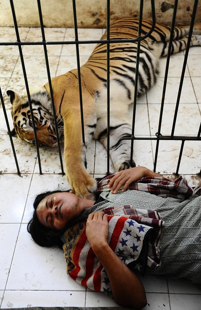 Animal antics ... Mulan paws Abduallah to make sure he's still awake. Picture: Robertus Pudyanto/G...