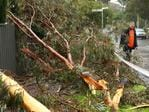 A lightning strike downs a tree outside at Myrtle Bank. Picture: Tait Schmaal