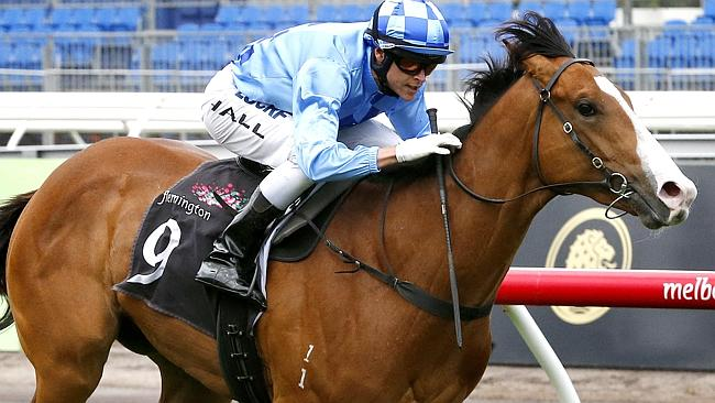 Risen from Doubt has the chance to stamp himself as a top-grade juvenile in the Silver Slipper. Picture: Wayne Ludbey