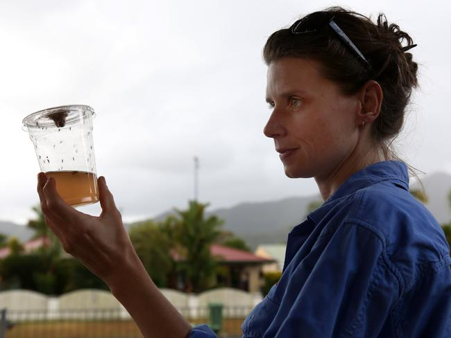 Eliminate Dengue's Petrina Johnson releasing bacteria-carrying mosquitoes in Cairns.