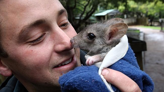 Warning To Slow Down For Joeys From Dusk To Dawn