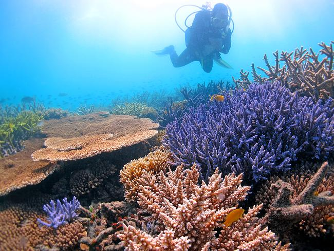 The reef is world heritage listed but could lose its classification. Picture: Ray Berkelmans