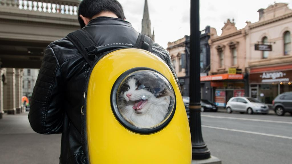 Cat Backpacking in Australia