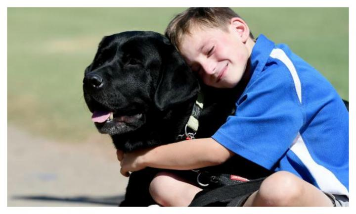Boy's service dog banned from classroom due to allergy concerns