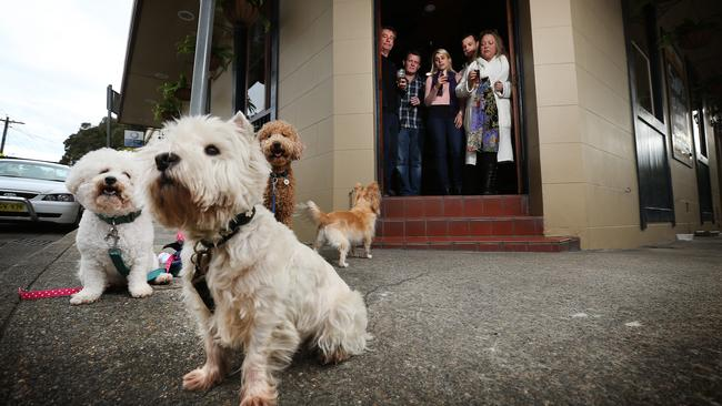 Best Dog Friendly Pubs Inner West