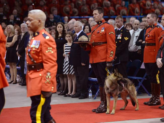 Where's my nmaster ... German Shepherd Danny follows the casket of his partner, the late RCMP Const. Dave Joseph Ross, as they arrive for the RCMP regimental funeral for three slain officers at the Moncton Coliseum on Tuesday, June 10, 2014 in Moncton, New Brunswick, Canada. Thousands of police officers from across Canada attended the funeral for Fabrice Gevaudan, Douglas Larche and Dave Ross, the three Mounties killed by a gunman on June 4, 2014. (AP Photo/The Canadian Press, Sean Kilpatrick)