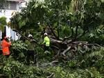 Workers remove a large tree from Abbott street in the Cairns CBD after severe tropical cyclone Ita makes landfall in North Queensland.