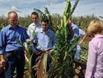 Premier Campbell Newman inspecting a flattened banana crop at Hope Vale. Source: Supplied