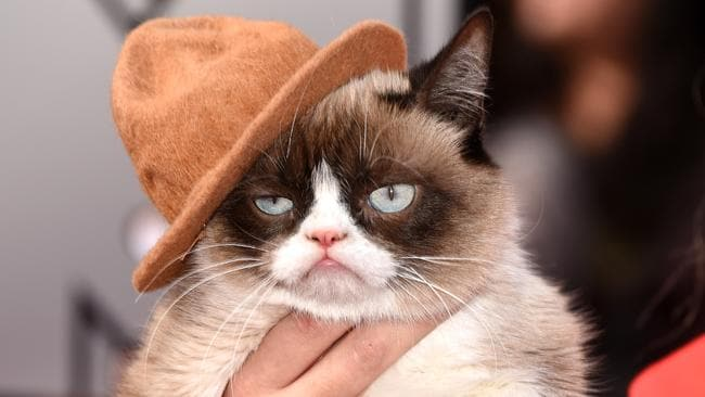 Grumpy Cat attends at the 2014 MTV Movie Awards in L.A. in April, 2014. Photo: Jason Merritt.