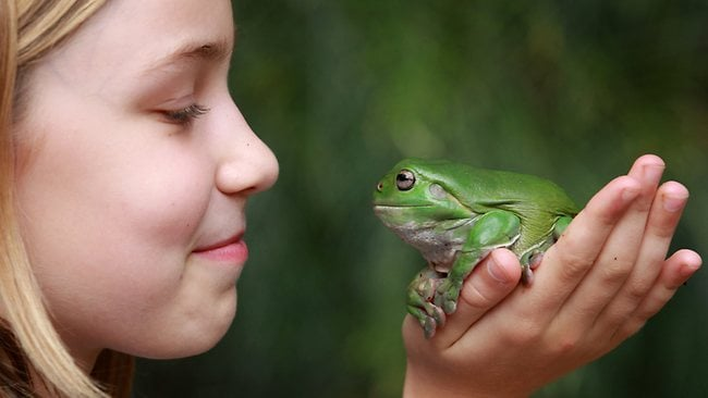 Homeground: Attract frogs to your yard | The Courier-Mail