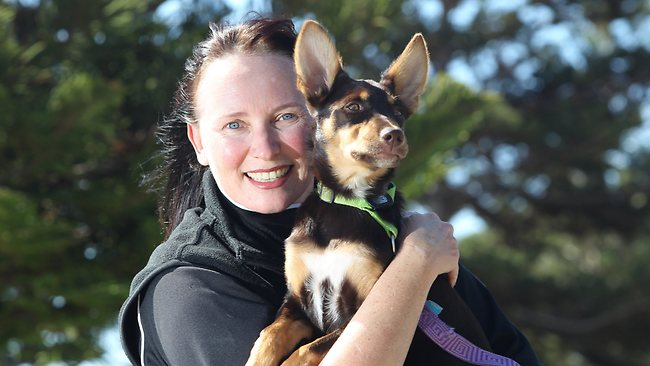 Small Dog Rescue Adelaide