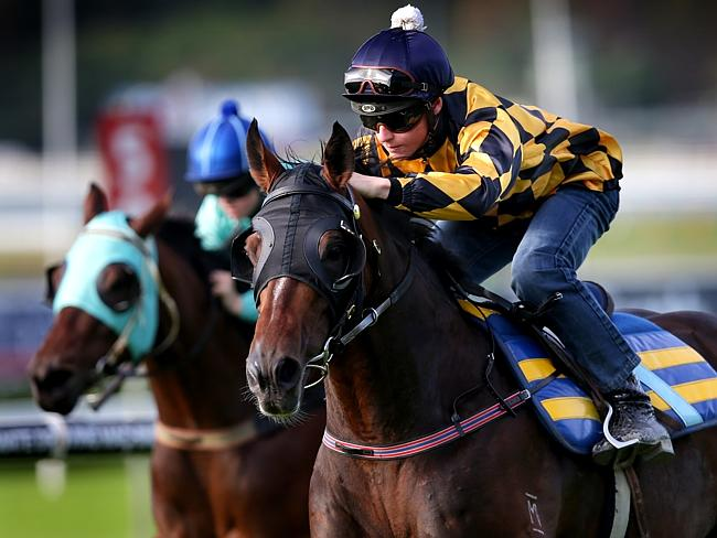 James McDonald rides It's A Dundeel at the Randwick barrier trials. Picture: Gregg Porteous