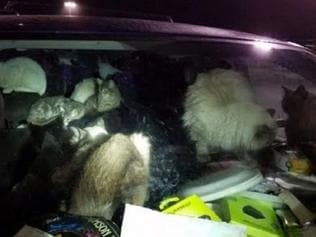 Supplied Editorial Alexandra Wingate and her mum, Sharyn Wingate, were living in a filthy van with 38 cats