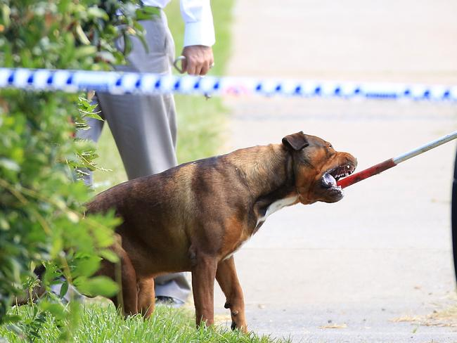 One of the dogs at the property is removed. Picture: Craig Greenhill