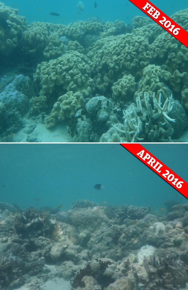 Great Barrier Reef before and after photos shot by Professor Terry Hughes. — Picture: Terry Hughes et al./Nature