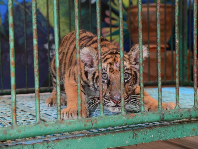 keeping animals in cages is cruel Introduction: it is true that one of the most important issues that many people of today society are very concerned for is the roles of zoos in protecting.
