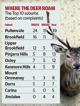 Brisbane's most problematic suburbs for wild deer.