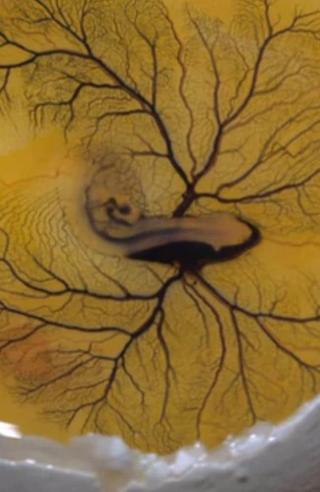 Egg yolk injected with ink, and the results are astounding. Picture: Youtube.