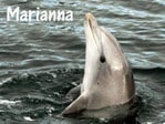 Marianna dolphin Picture: Marianna Boorman