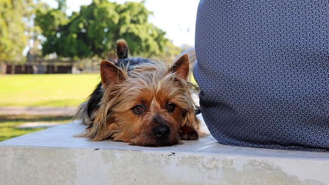 An Australian terrier for an Australian apartment. Makes sense.
