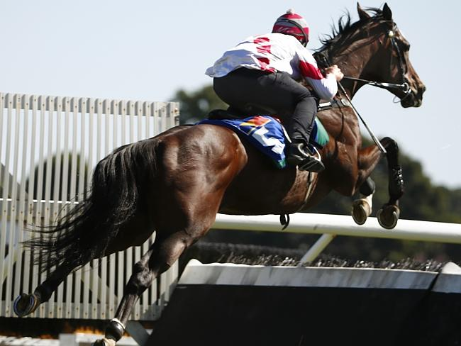 Former Group 1 winner Glencadam Gold will be an attraction when he makes his jumps debut this week. Picture: Michael Klein